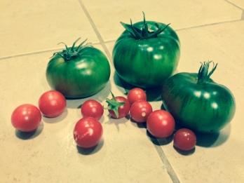 Tomato snack for tomorrow.